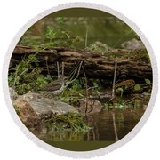 Spotted Sandpiper 2 Round Beach Towel