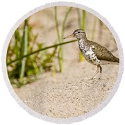 Spotted Sandpiper Pictures 45 Round Beach Towel