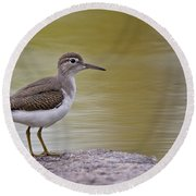 Spotted Sandpiper Pictures 51 Round Beach Towel