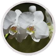 Spray Of Beautiful White Orchids Round Beach Towel