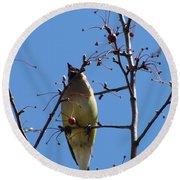 Spring Bird Singing Round Beach Towel