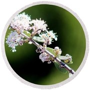 Spring Blossoms White 031015aa Round Beach Towel