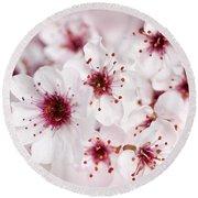 Spring Cherry Blossom Round Beach Towel