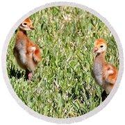 Spring Chicks  Round Beach Towel