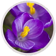 Spring Crocus Round Beach Towel