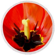 Red Tulip In Spring Round Beach Towel
