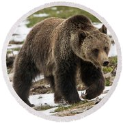 Spring Grizzly Bear Round Beach Towel