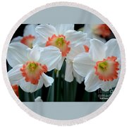 Spring Jonquils Round Beach Towel