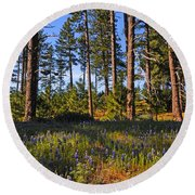 Spring Lupines In The Forest Round Beach Towel