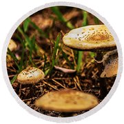Spring Mushrooms Round Beach Towel