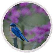 Spring Time Blue Bird Round Beach Towel