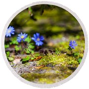 Spring Wild Flowers Round Beach Towel