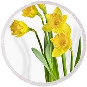 Spring Yellow Daffodils Round Beach Towel