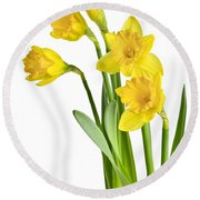 Spring Yellow Daffodils Round Beach Towel
