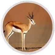 Springbok On Sandy Desert Plains Round Beach Towel