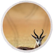 Springbok Resting On Green Desert Grass Round Beach Towel