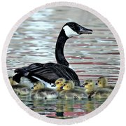 Spring's First Goslings Round Beach Towel
