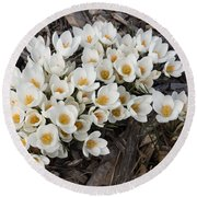 Springtime Abundance - A Bouquet Of Pure White Crocuses Round Beach Towel
