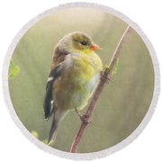 Springtime Goldfinch Round Beach Towel