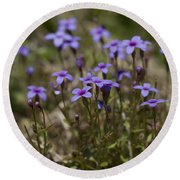 Springtime Tiny Bluet Wildflowers - Houstonia Pusilla Round Beach Towel