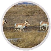 Sprinting Pronghorn Round Beach Towel