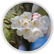 Sprouting Cherry Blossoms Round Beach Towel