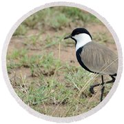 Spur-winged Lapwing Round Beach Towel