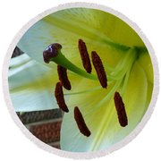 Sq Lily Morning Round Beach Towel