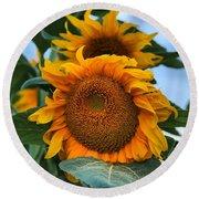 Squamish Sunflower Portrait Round Beach Towel