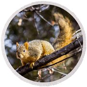 Squirrel 1 Round Beach Towel