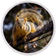 Squirrel 2 Round Beach Towel
