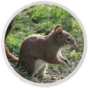 Squirrel And His Sunflower Seed Round Beach Towel