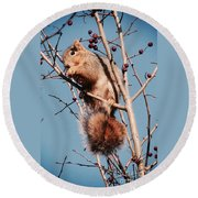 Squirrel Berry Round Beach Towel