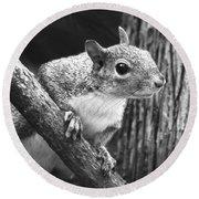 Squirrel Black And White Round Beach Towel