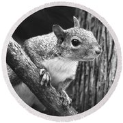 Squirrel Black And White Round Beach Towel