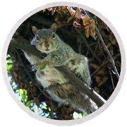 Squirrel By Nest Round Beach Towel