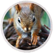 Squirrel Close-up Round Beach Towel