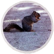 Squirrel Eating A Nut Round Beach Towel