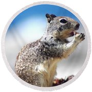 Squirrel Enjoying Lunch On The Beach Round Beach Towel
