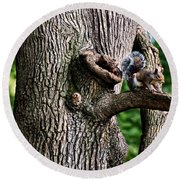 Squirrel Guarding Watering Knot Round Beach Towel