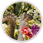 Squirrel In The Botanic Garden-dallas Arboretum V4 Round Beach Towel