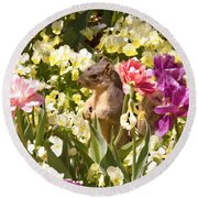 Squirrel In The Botanic Garden-dallas Arboretum V6 Round Beach Towel