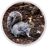Squirrel In The Park-boston  V6 Round Beach Towel