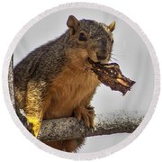 Squirrel Lunch Time Round Beach Towel