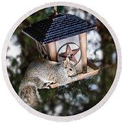 Squirrel On Bird Feeder Round Beach Towel by Elena Elisseeva