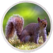 Squirrel On Grass Round Beach Towel