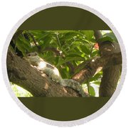 Squirrel On The Tree Round Beach Towel