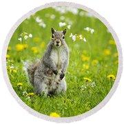 Squirrel Patrol Round Beach Towel