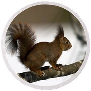 Squirrel Profile Round Beach Towel