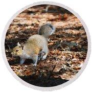 Squirrel Time Round Beach Towel